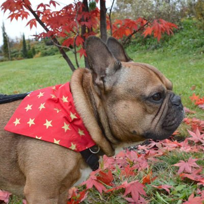 Christmas Dog Bandana, Gift for dog Neckerchief, gold stars, model Gwiazdor Psiakrew